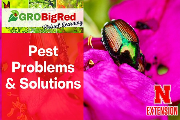 GRO Big Red Virtual Programs - Pest Problems & Solutions