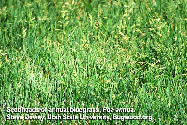 Hort Update for August 2, 2021, Nebraska Extension, http://communityenvironment.unl.edu/update06022021