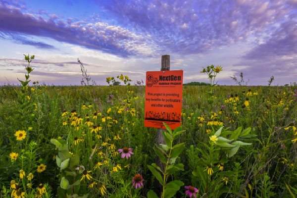Seed A Legacy - Pollinator Habitat Program, Nebraska Extension Acreage Insights for August 17, 2018, https://communityenvironment.unl.edu/seed-legacy