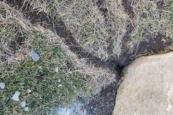 Vole damage in turfgrass. Hort Update for February 15, 2021, Nebraska Extension, http://communityenvironment.unl.edu/update20210215