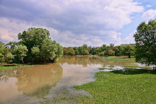 Flooded Fruit & Vegetable Gardens - What's Safe to Eat?, Nebraska Extension Acreage Insights for July 3, 2018, http://communityenvironment.unl.edu/flooded-garden-safety
