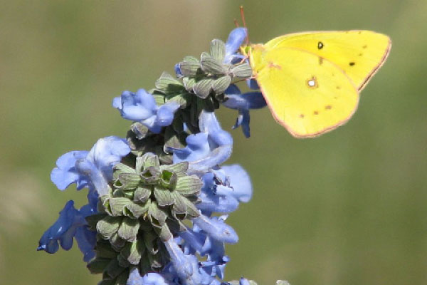 Tips for Attracting Butterflies, Nebraska Extension Acreage Insights for August 1, 2018, https://communityenvironment.unl.edu/tips-attracting-butterflies