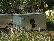 Box trap for Voles