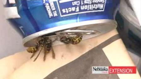 Yellow-Jacket Wasp
